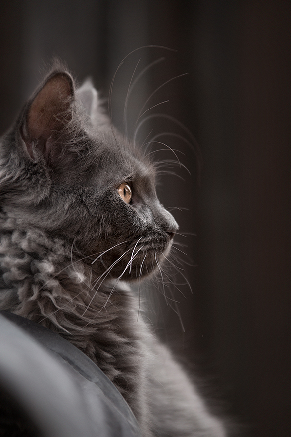 Tierfotografie on Location // Maine Coon // Salt